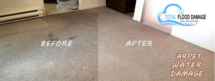 Expert Tips to Recover Carpet From Water Damage Condition