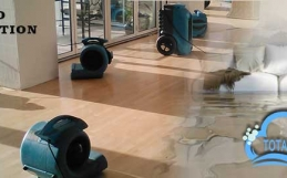 Treat Your Wet Carpets By Opting for Professional Water Damage Restoration Services