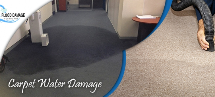 How to Prevent Carpet Mold After the Water Damage?