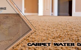 What Are The Causes Of Carpet Water Damage And Its Solutions?