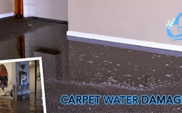 Never Forget Considering Things Before You Dry The Carpet After Water Damage