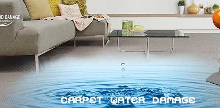 Look at the Right Solution for Your Carpet Water Damage