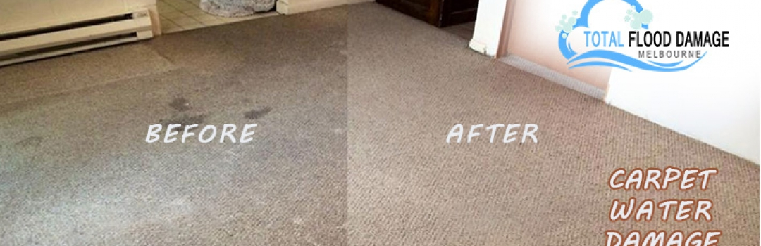 How to Recover From Carpet Water Damage? A Beginner's Idea!