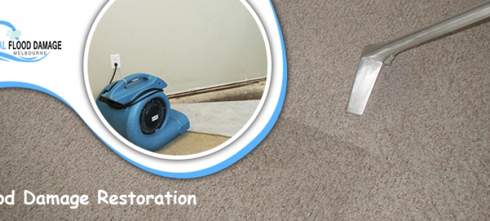 All You Need to Know About Carpet Cleaning Services